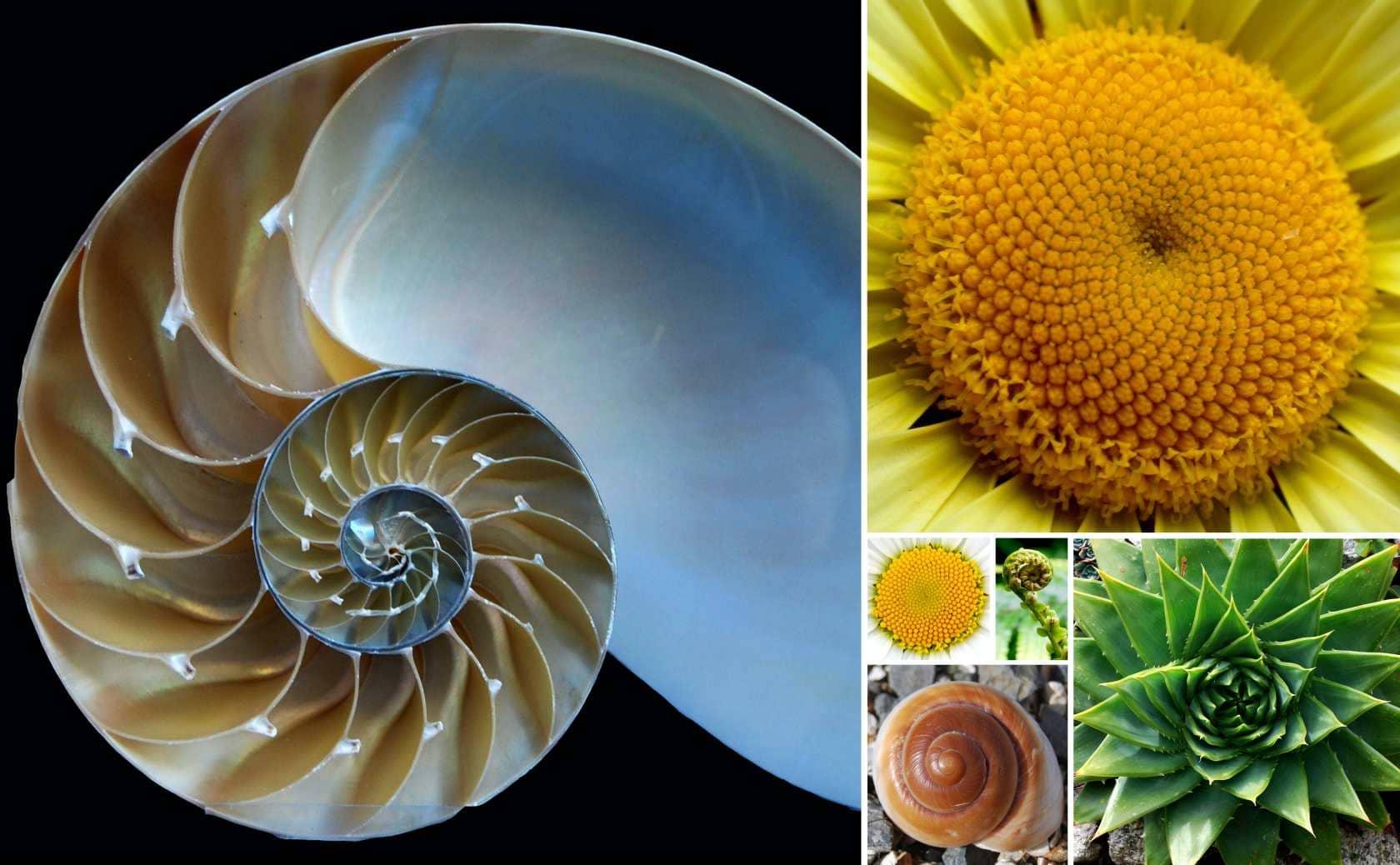 自然界の黄金比